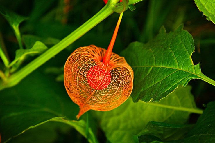 Why China is attractive; Chinese lantern