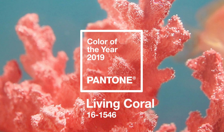 Découvrez la couleur Pantone de l'année 2019 !