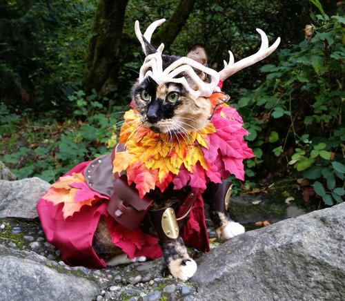 druid bard sorcerer barbarian character classes d d d criticalrole dicecameraaction wafflecrew strix keyleth scanlan dungeonsanddragons catcosplay characterclass catcostume catphotography catpics cosplay