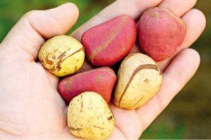 kloa 10 health benefits