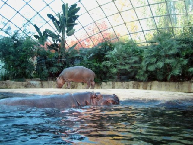 BERLIN ZOOLOGICAL GARDEN - most fascinating zoos