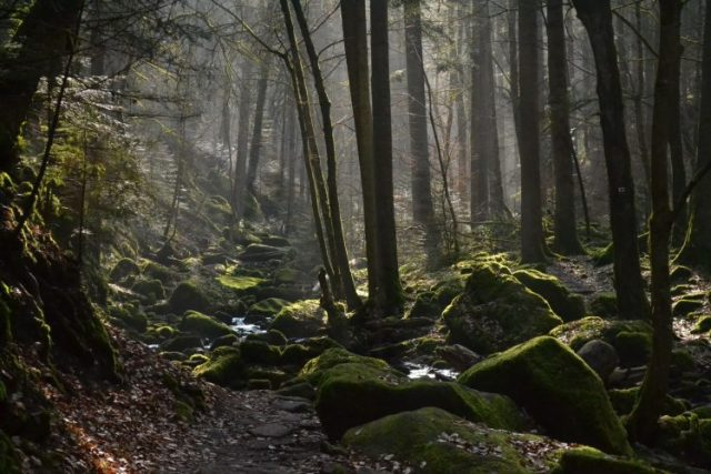 Black Forest - most beautiful forests