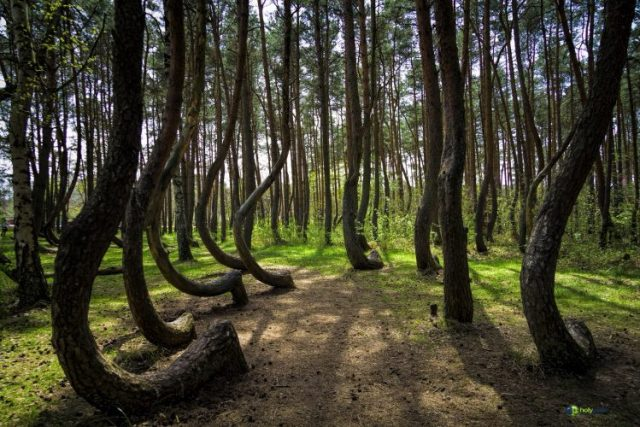 Crooked Forest, Poland - most beautiful forests
