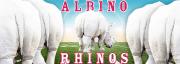 albino rhinos