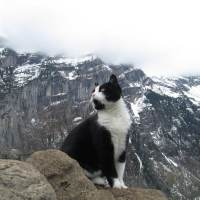 In 2013 a cat guided a lost hiker down a Swiss mountain,the little feline made sure the man wasn't left behind by checking on him every now and then.Once they reached their destination they parted ways.
