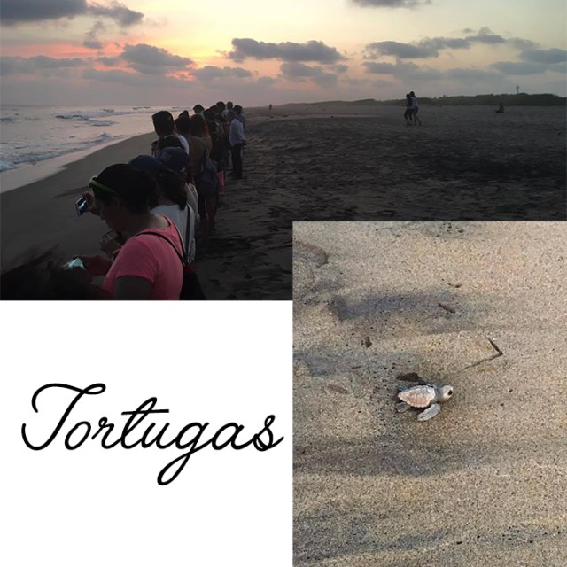 CHACAHUA-tortugas