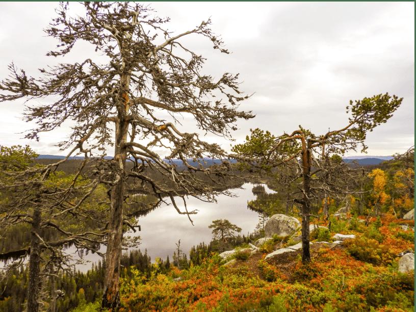 Utsikt fra Perhusfjellet - Oslomarka - Nordmarka - Fantastiske marka