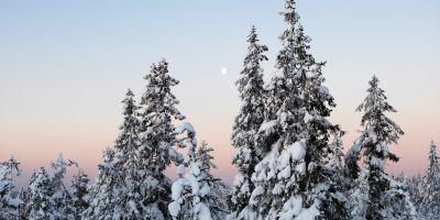 Soloppgang i eventyrskogen - Oslomarka - Nordmarka - fantastiske marka