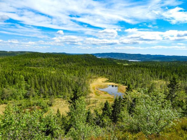 Flott utsikt over Krokskogen fra Rughaugen - Oslomarka - Fantastiske marka