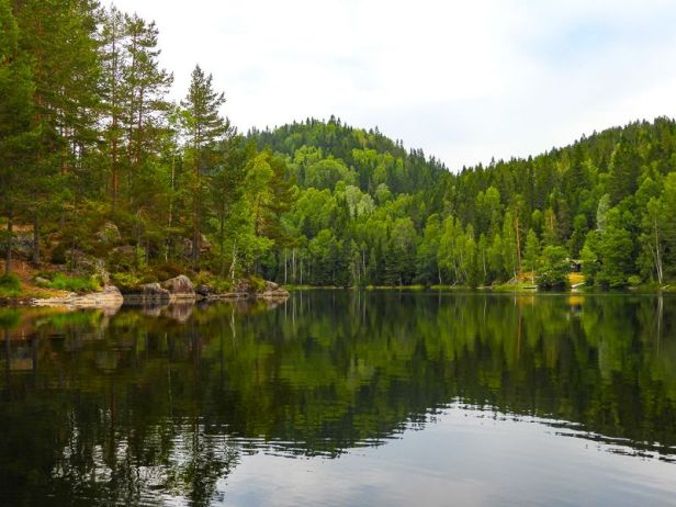 Tonekollen sett fra Luttjern - Oslomarka - Østmarka - Fantastiske marka