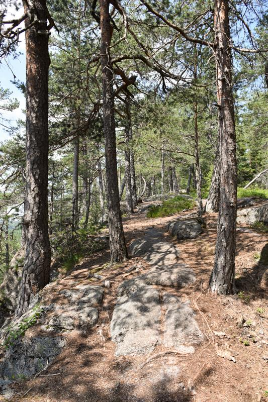 Furuskogen oppover Svartvannsåsen - Kjekstadmarka - Oslomarka - Fantastiske marka