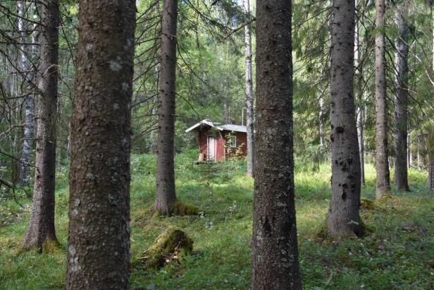 Deliseterkoia dypt i Østmarkas skoger - Oslomarka - Åpne koier - Fantastiske marka