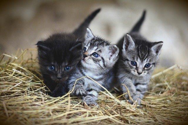 アレキサンドロス川上洋平の猫の名前や種類は?ねこの動画がかわいい!