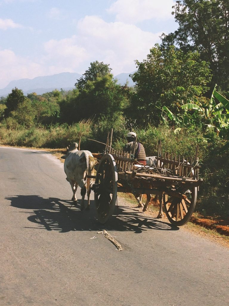 An example of a cow cart that nearly killed me