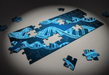 Cripsr gene editing puzzle