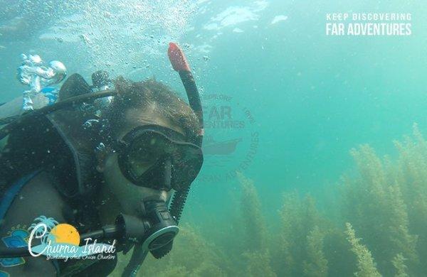 Scuba Diving in Majestic Kelp Forest