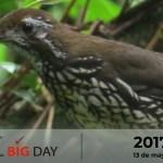 Global Big Day 2017 | Bioexploradores Farallones