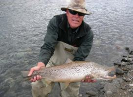Brown trout from Patagonia Argentina