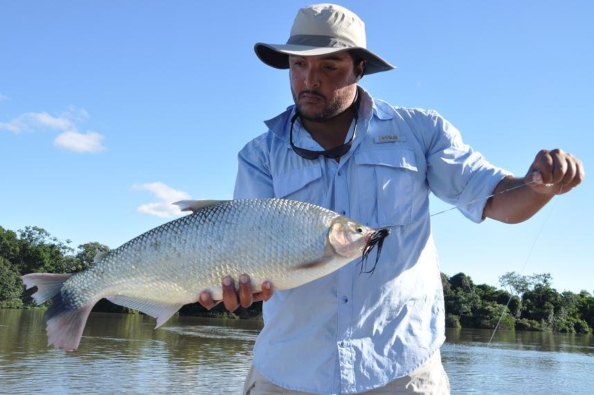 May on the rio parana faraway fly fishing for Parana the fish