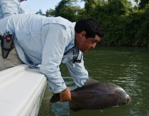 Pacu Argentina Fly fishing