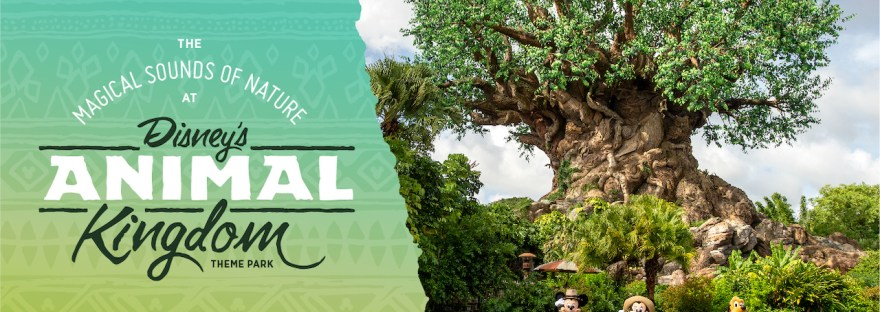 ASMR at Disney's Animal Kingdom