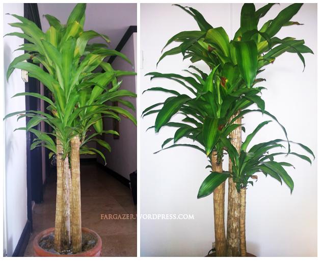 Philippine House Plants