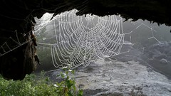 Misty spider web