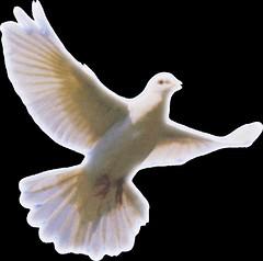 white dove snip