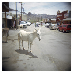 Oatman, Arizona.  Photo by escapo