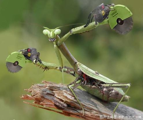 teknoböcek