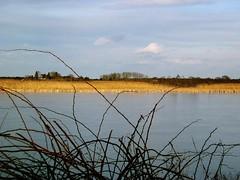 Ipswich Salt Marsh