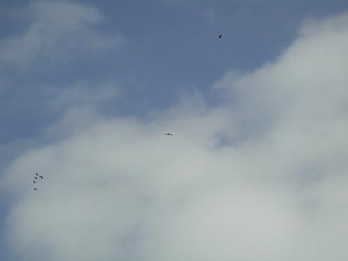 Ravens Flying High