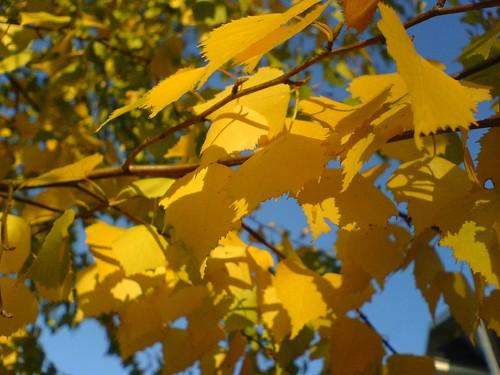 Leaves of fall by dawe2k5.