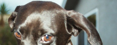 bixby-eyes