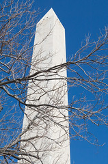 "671B4368: Washington Monument and Tree Branches • <a style=""font-size:0.8em;"" href=""http://www.flickr.com/photos/54494252@N00/14471105/"" target=""_blank"">View on Flickr</a>"