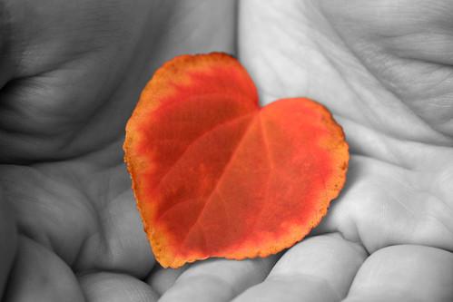 Autumn Love Heart