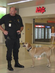 Boomer the bomb-sniffing dog at CAK