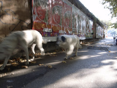 roman street dogs by AugustGarage
