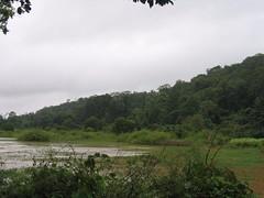 Kollibacchalu Dam -Malenadu Heavy Rain Effects Photography By Chinmaya M.Rao   (99)
