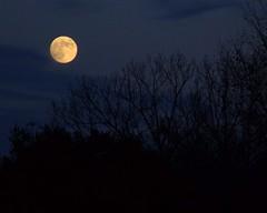 Hunter's Moon - color