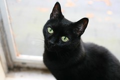 A Black Cat Crosses My Path Every Day