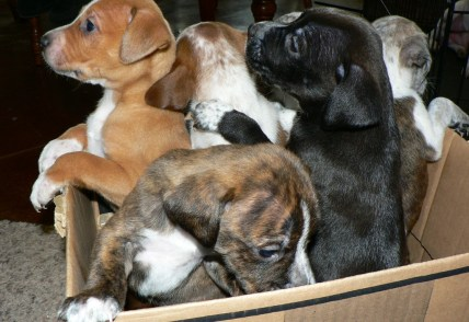 A cardboard box full of puppies