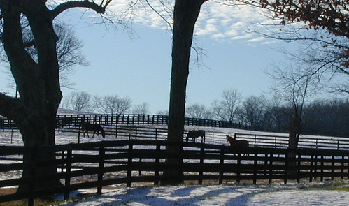 Horses in the pasture at Harrison House.