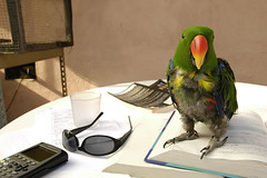 Birdy does Stats hw