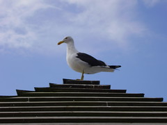 Seagull at the boat stop