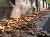 El color del otoño
