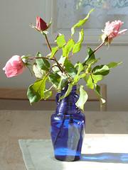 Roses in bottle