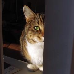Zhuzha - Spy Cat