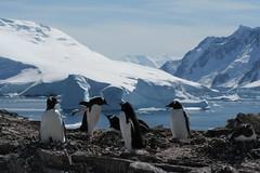 Antarctica at its finest