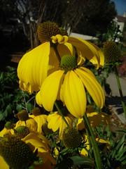 heat wave flowers
